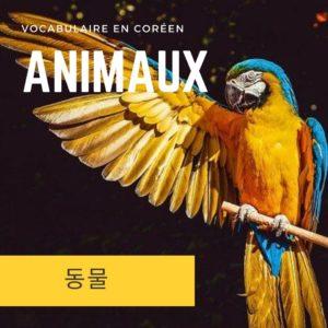 Perroquet multicolore